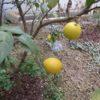 冬の庭のグランドカバー