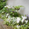 庭の花と多聞台緑地