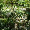 庭のバイカウツギとミニバラ