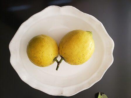 レモンの収穫2021