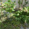 庭の花いろいろ
